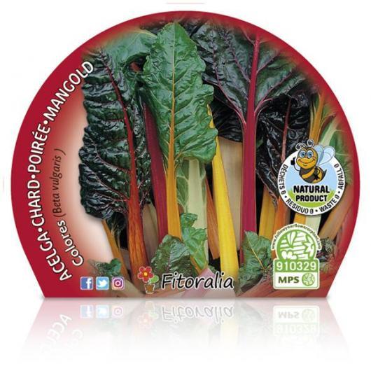 Plantón ecológico de  Acelga Colores maceta 10,5 cm de diámetro