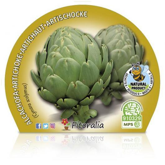 Plantón ecológico de  Alcachofa maceta 10,5 cm de diámetro