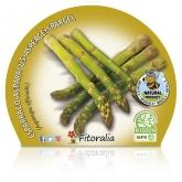 Espargos Organic mudas de maconha 10,5 centímetros de diâmetro
