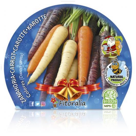 Plantón ecológico de  Zanahoria Colores maceta 10,5 cm de diámetro