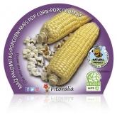 Pipoca Milho Mudas ecológica pot diâmetro 10,5 centímetros