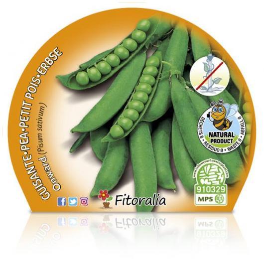 Plantón ecológico de  Guisante Mata Baja maceta 10,5 cm de diámetro