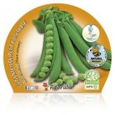 Eco pot de ervilha mudas Mata Alta 10,5 centímetros de diâmetro