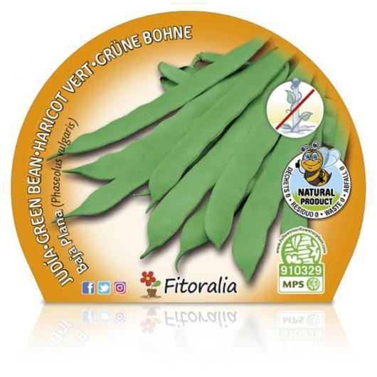 Plantón ecológico de  Judía Baja Plana maceta 10,5 cm de diámetro