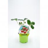 Morango pot mudas Ecological Kids Coleção De Forest 10,5 centímetros de diâmetro