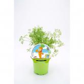 Cenoura Mudas Coleção Eco KIDS pot diâmetro 10,5 centímetros