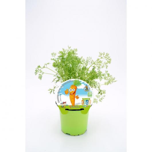 Plantón ecológico de  Zanahoria Colección KIDS maceta 10,5 cm de diámetro