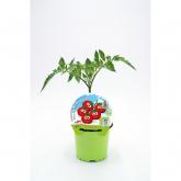 Tomatinho Mudas KIDS ecológicos Coleção pot diâmetro 10,5 centímetros