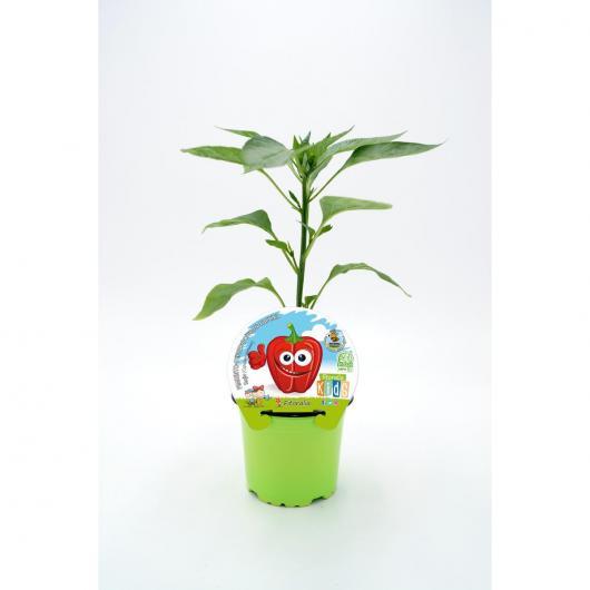 Plantón ecológico de  Pimiento Rojo Colección KIDS maceta 10,5 cm de diámetro