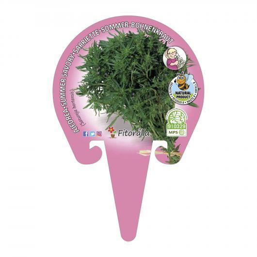 Plantón ecológico de  Ajedrea maceta 10,5 cm de diámetro