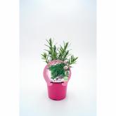 Plantón ecológico de  Lavanda maceta 10,5 cm de diámetro