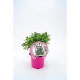 Pot mudas Ecológica Poleo 10,5 centímetros de diâmetro