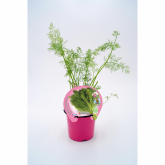 Dill vasos de mudas ecológicos 10,5 centímetros de diâmetro