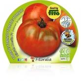 Eco Mudas híbrido Salada de Tomate Katon Pacote de 12 unidades.