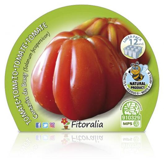 Plantón ecológico de  Tomate Corazón De Buey Pack 12 ud. 34x32mm