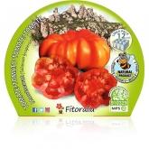 De mudas de tomateiro ecológicos Montserrat Pacote de 12 unidades.