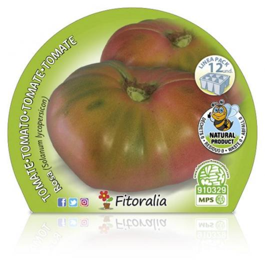 Plantón ecológico de  Tomate Rosa Pack 12 ud. 34x32mm