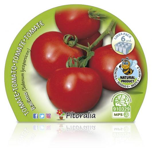 Plantón ecológico de  Tomate Racimo Pack 6 ud. 54x43mm