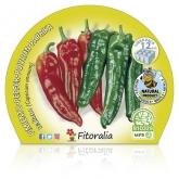Plantón ecológico de  Pimiento Italiano Pack 12 ud. 34x32mm