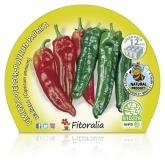 Pimenta mudas ecológicos Italiano Pacote 12 unidades.