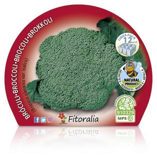 Plantón ecológico de  Brócoli Verde Pack 12 ud. 34x32mm
