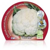 Branco Couve-flor mudas pacote ecológico 12 unidades.