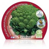 Plantón ecológico de  Coliflor Romanesco Pack 6 ud. 54x43mm
