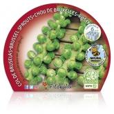 Mudas ecológica Bruxelas Col Pack 6 ud.