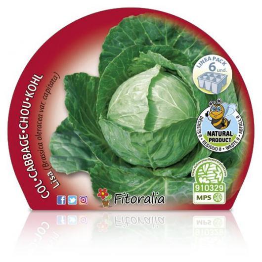 Plantón ecológico de  Col Redonda Lisa Pack 6 ud. 54x43mm