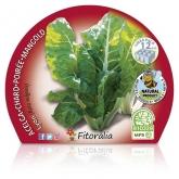 Plantón ecológico de  Acelga Pack 6 ud. 34x32mm