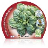 Plantón ecológico de  Espinaca Pack 12 ud. 34x32mm