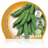 Mudas Ecológicos Peas baixo Pack 6 ud.
