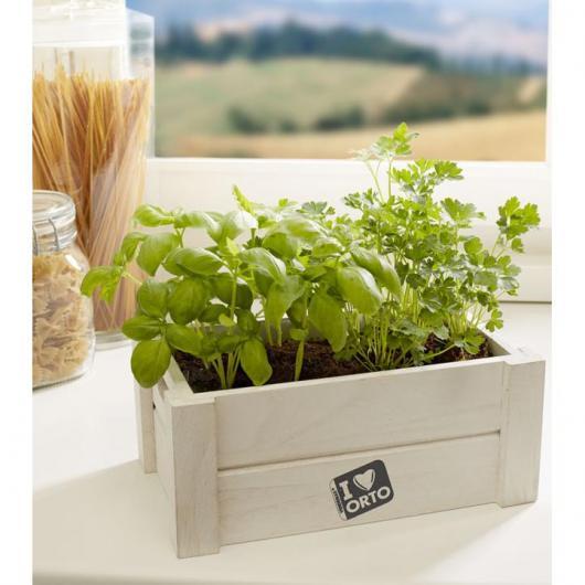 Caja huerto aromáticas Easy Orto