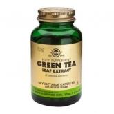 Hoje extrato de chá verde Solgar, 60 cápsulas vegetais