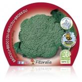 Plantón ecológico de Brócoli Verde Pack 6 ud. 54x43mm