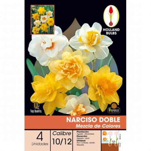 Bulbo Narciso doppio mix di colori, 4 unità