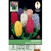 Bulbo Jacinto mezcla de colores 3ud