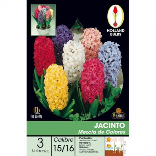 Bulbe de jacinthe mélange de couleurs 3 pièces