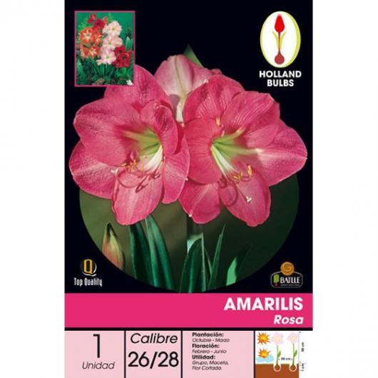 Bulbo Amarilis Rosa 1ud