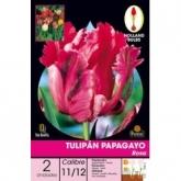 Papagayo bulbo rosa tulipa, 2UD