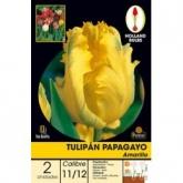 Bulbo de tulipa amarela Papagayo, 2UD