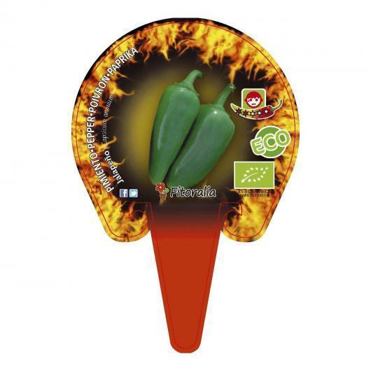 Plantón ecológico de Jalapeño maceta 1 L