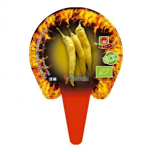 Plantón ecológico de Picante Hot Banana maceta 1 L