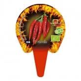 Plântula ecológica Spicy Thai 1L
