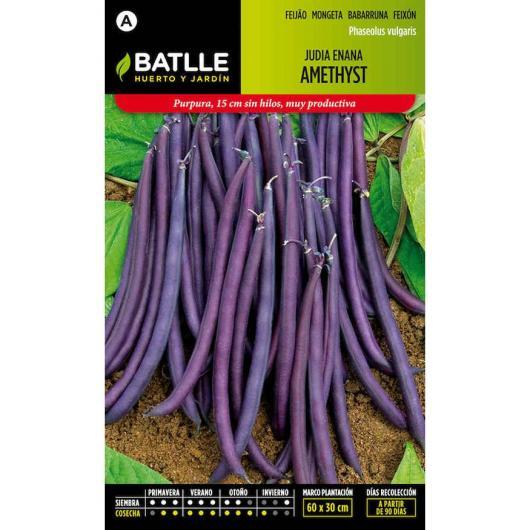 Graines de haricot nain violet AMETHYST 25 g