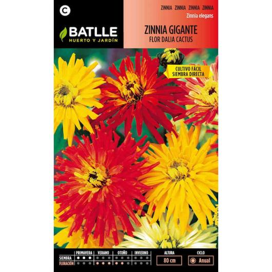 Semillas de Zinnia gigante flor de cactus
