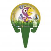 Grama aves ecológica mudas envasamento 1L