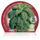 Kale Cabbage mudas pote ecológica 10.5 cm de diâmetro