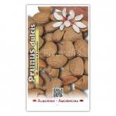 Almendro Guara (Prunus dulcis)