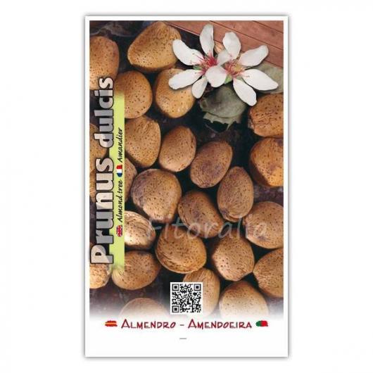Almendro Marcona (Prunus dulcis)